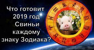 Гороскоп на 2019 — год свиньи: что сулит 2019 год каждому из нас?