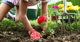 Лунный календарь огородника садовода на май 2019 года
