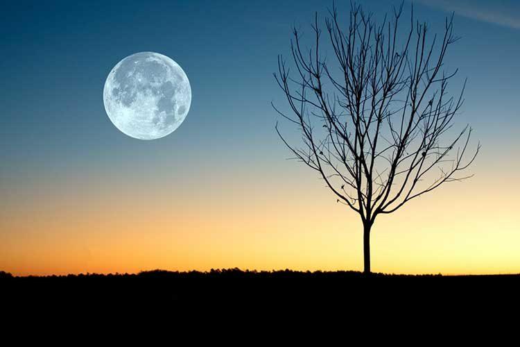 Лунный календарь огородника садовода на май 2020 года
