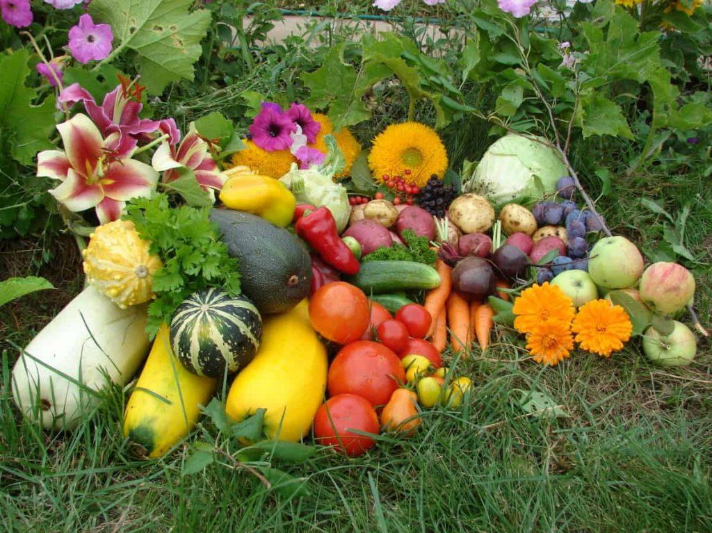 Лунный календарь огородника садовода на июнь 2020 года