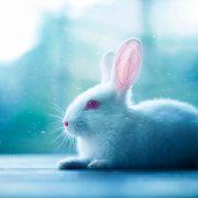 Гороскоп Кролик июнь 2020