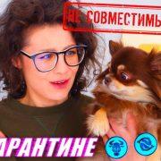Проверяем собачьи гороскопы! Подходят ли мне мои собаки по знакам зодиака? Проверка на карантине
